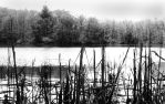 Weedy Lake by artisticotis