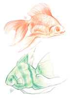quick sketches of fish by AlaxendrA