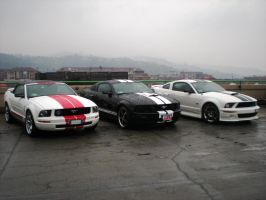 Ford Mustangs by franco-roccia