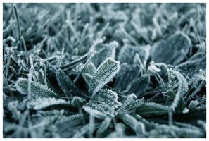 Frost by guiseppe