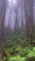 Rainforest Image from Alaska by akdperry