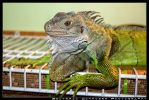 Lizard Lounge by GreenIguana