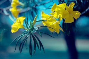 How Yellow Is Your Day by DizzyCowPhotography