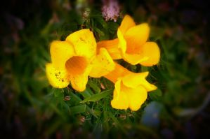 yellow flowers by BoudreauX24
