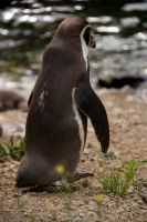 Dramatic exit penguin by Bloodstained-Snow