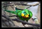 Watchful Parrot by DarthIndy