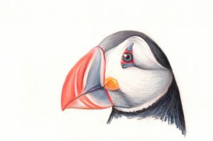 Puffin by jesandersen