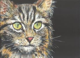 young tabby cat by acrylicwildlife