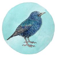 Starling by moussee