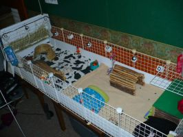 my guinea pig cage by Luna-Ortis