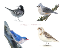 Bird Speedpaints #2 by Nimitsuu