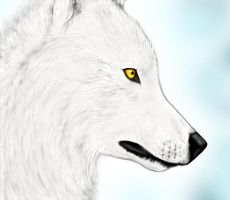 A White Wolf by ChiroOokami
