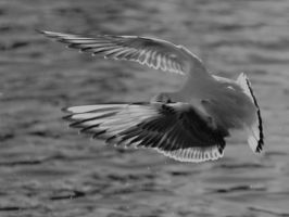 braking seagull by pagan-live-style