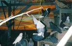 Pigeon Party by bluebellangel19smj