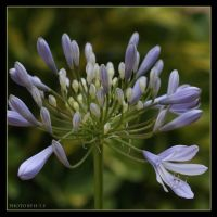 Flower 13 by Globaludodesign