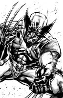 Wolverine by caananwhite