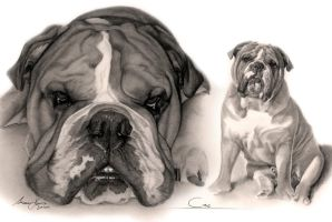 Commission - Victorian Bulldog 'Sirius' by Captured-In-Pencil