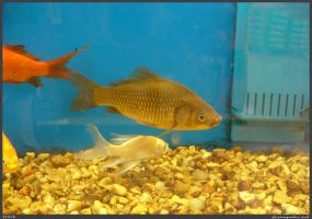 Fish Stock 0030 by phantompanther-stock