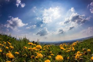 Sunny Day by fti7