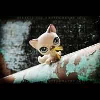 The Tale Of The Missing Canary by tracieteephotography