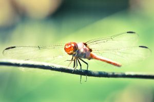 Red Stinger II by theChrisScott