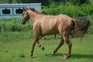QH 1 by Spotstock