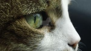 Close-Up Cat by Bugsyboo1313