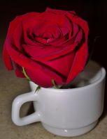 A Cup of Red Rose by TinaCaper
