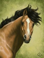 Speedpainting - arab stallion by NutLu