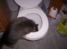 drinking outta the toilet 2 by nikkihog