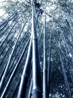 Bamboo in the Blue by Bkitten