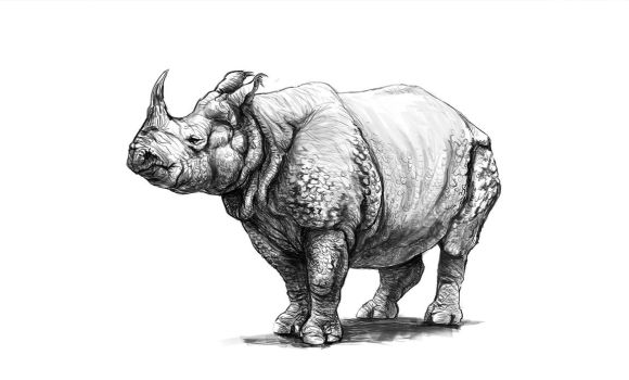 Indian Rhino by yty2000