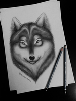 Wolf study by NightmareQUEEN1998