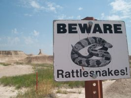 Rattlesnakes! by FurnaceFairy