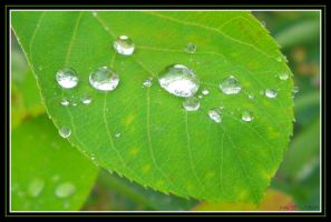 Dew by Xas421