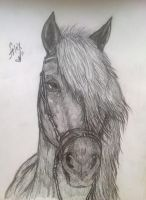 Horse portrait by Sandra-Cooper