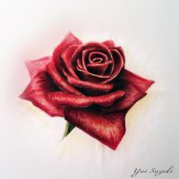 Water color - red rose by yui701