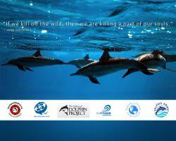 Save Japan Dolphins Wallpaper by MarcWF