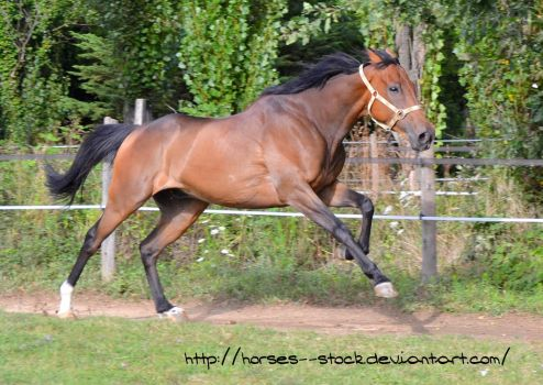 Justification - Stock 15 by Horses--Stock