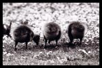 Three Little Bums. by sekhmet-neseret