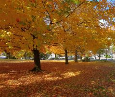 Carpet of Leaves by body-electric