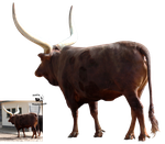 Cut-out stock PNG 123 - watusi cow by Momotte2stocks