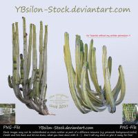 Cactuses with long arms by YBsilon-Stock by YBsilon-Stock