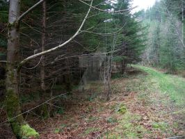 Old Logging Road by mrs-morgan