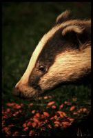 Badger 2 by Batteryhq