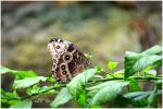 Julie's butterfly III by timelesscolors