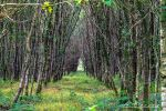 forest foret des aulneaux Orne France by hubert61