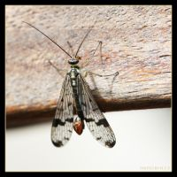 Scorpion fly by Globaludodesign