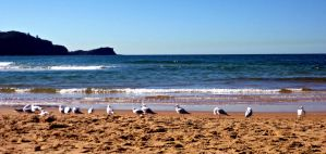 Seagulls at Avoca by 1-Lilith-1