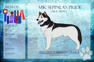 BIS ECh SD/SwDCh M!K Seppala's Pride...Ref Sheet by xMush-Kennelsx